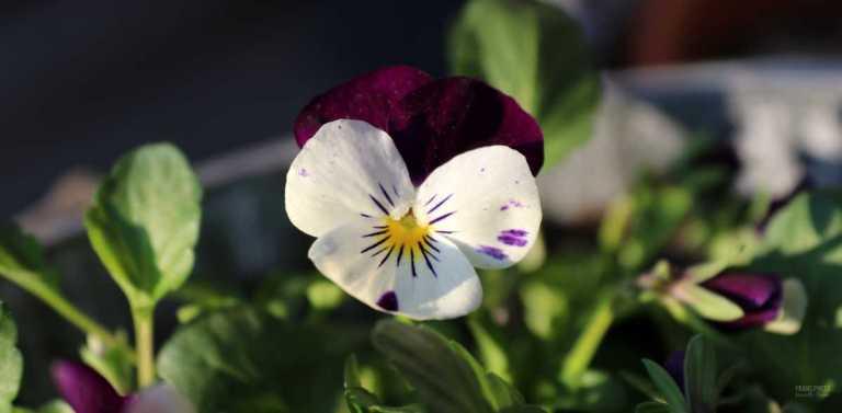flower_francphoto_180419