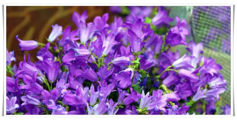 grassagarden_blommor2_francphoto_180415