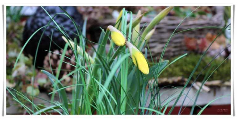 grassagarden_blommor_francphoto_180415_inside