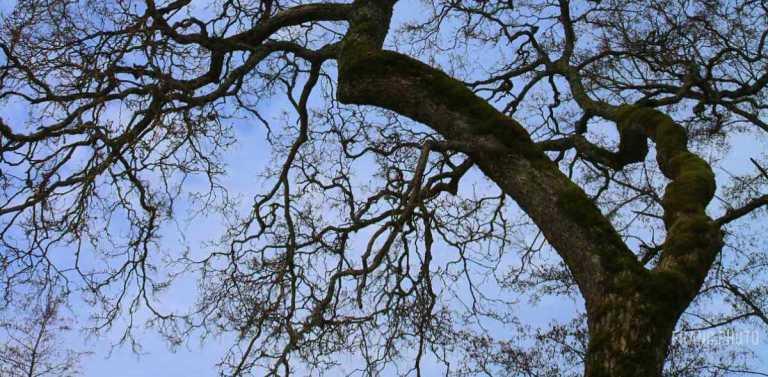 träd_april_2018_francphoto_1200_590