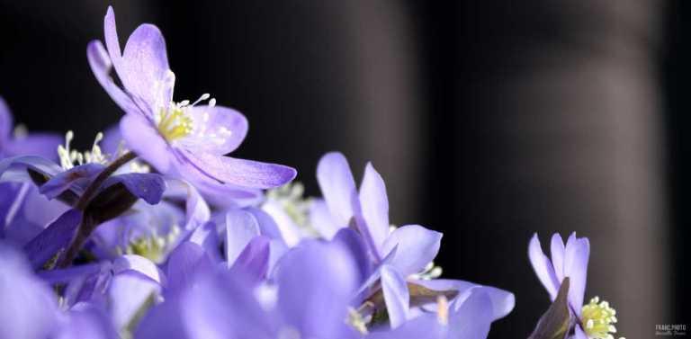 blasippa3_francphoto_180506