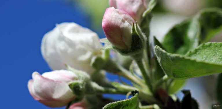 roses_francphoto_180513