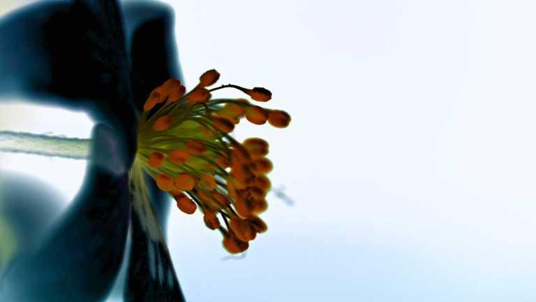 abstraktflower5_francphoto_180618