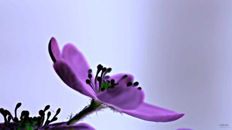 abstraktflower6_francphoto_180618