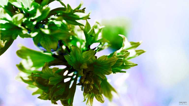 flower_green_francphoto_180701