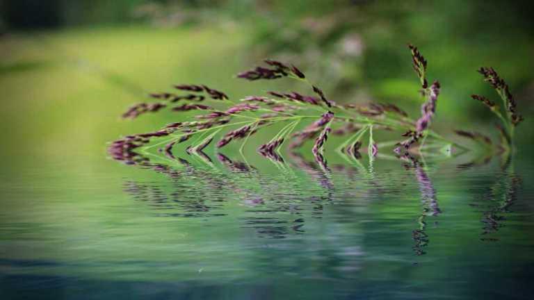 grasstra_vatten_francphoto_180617_NF