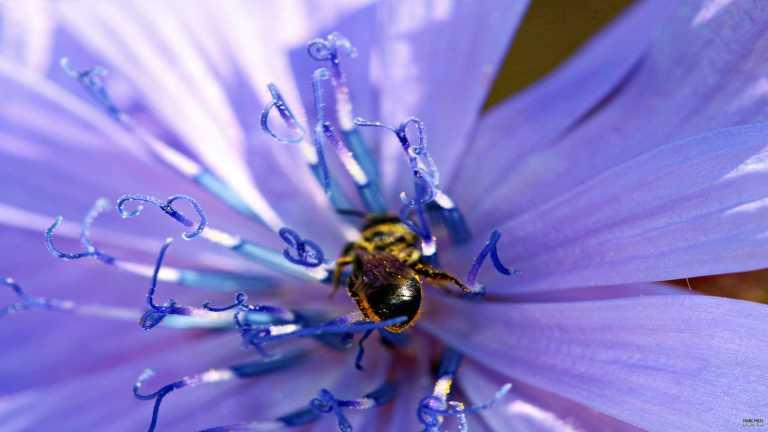 bi_lila_flower_francphoto_1807