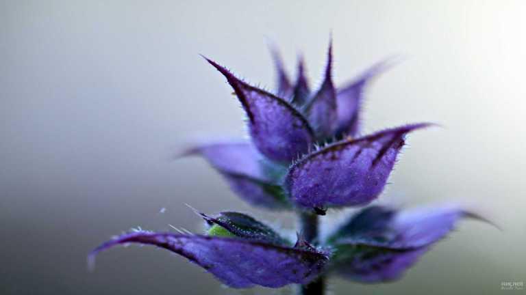blomma_lila_francphoto_180711