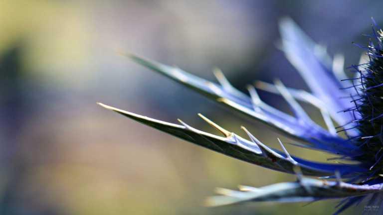 blue_flower_francphoto_2_180715