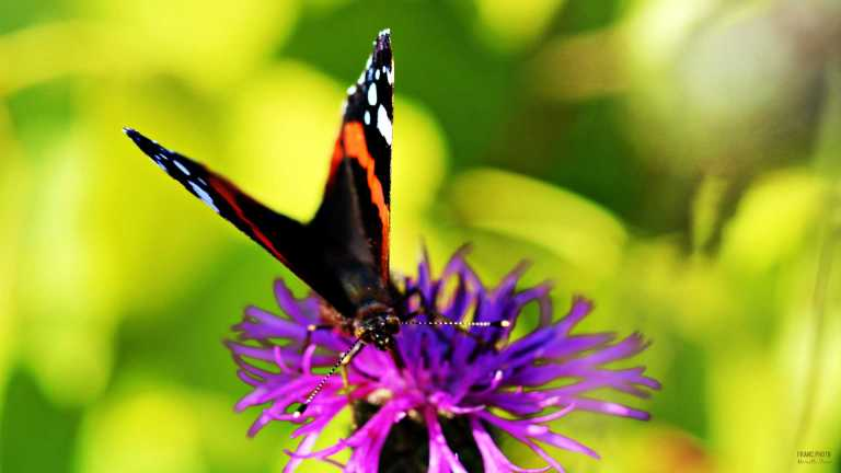 butterfly_francphoto_180714