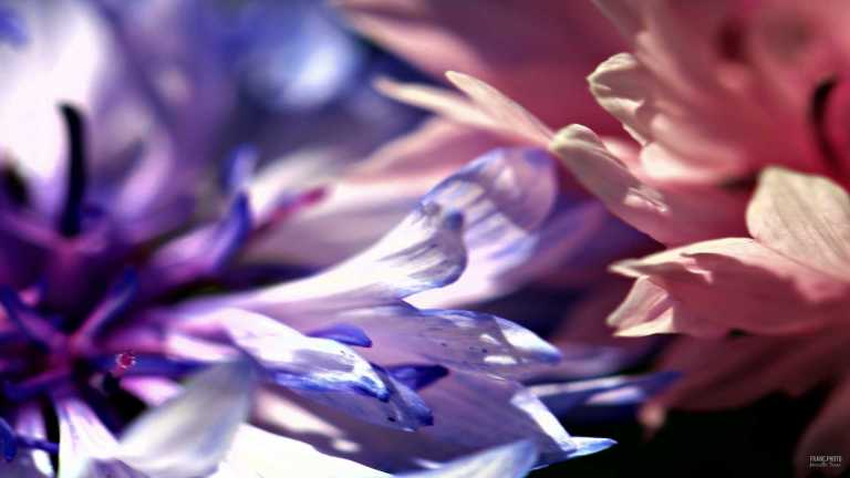 flower1_francphoto_180701
