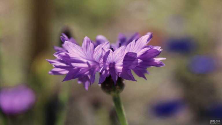 flower3_francphoto_180701