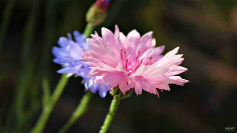 flower4_francphoto_180701