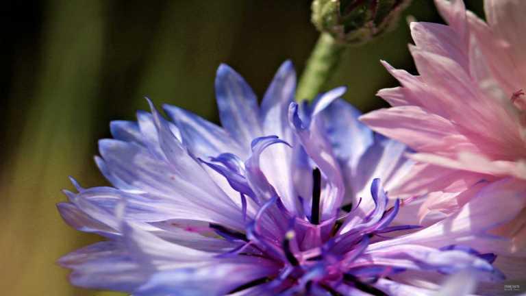 flower5_francphoto_180701