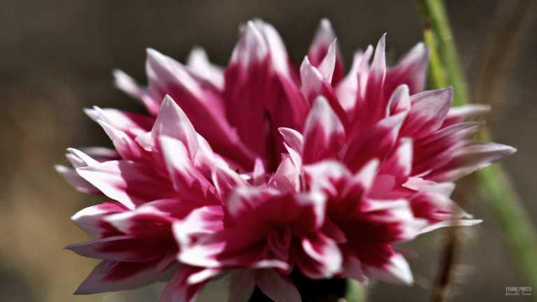 flower7_francphoto_180701