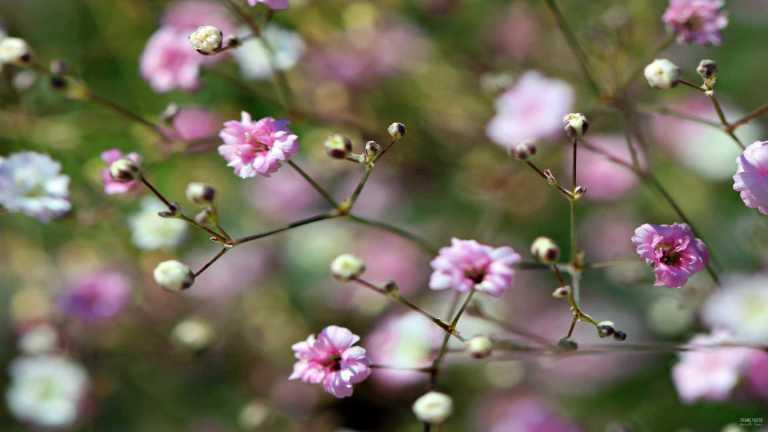 flower_vitrosa2_francphoto_180715