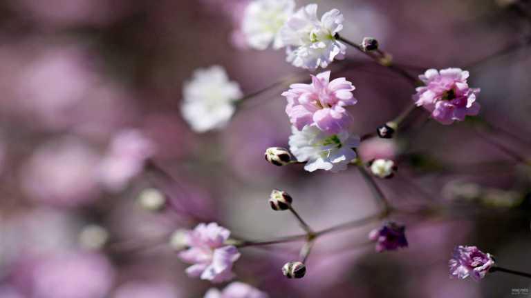 flower_vitrosa_francphoto_180715
