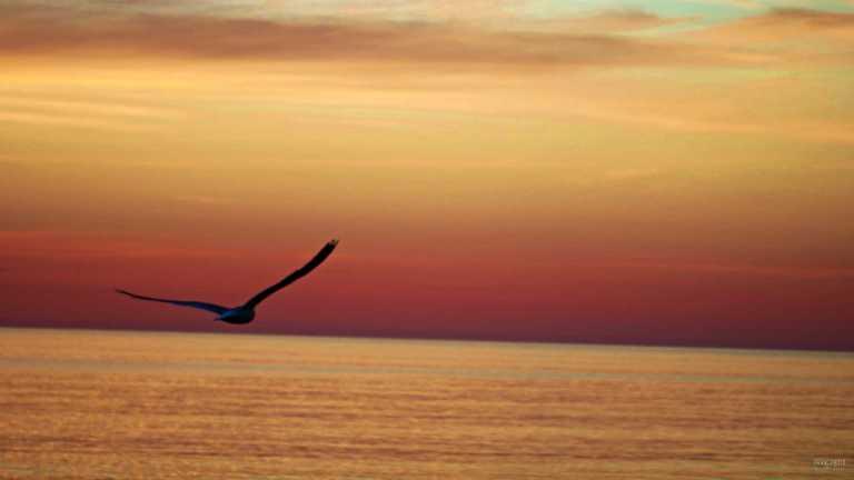 gotland_natur_bird_francphoto_180714