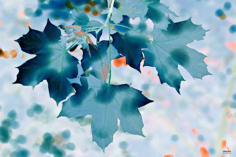 leaf_francphoto_180701.JPG