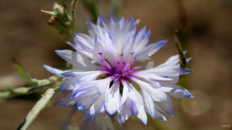 no1_flower_francphoto_180701