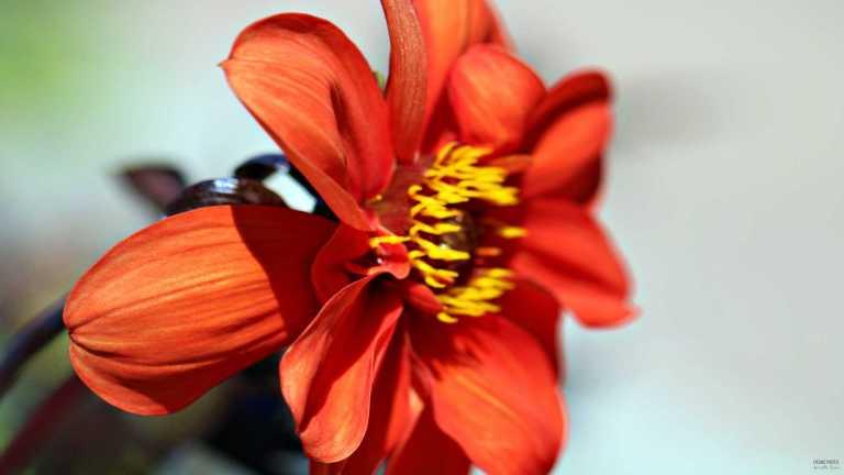 read_flower_francphoto_1807