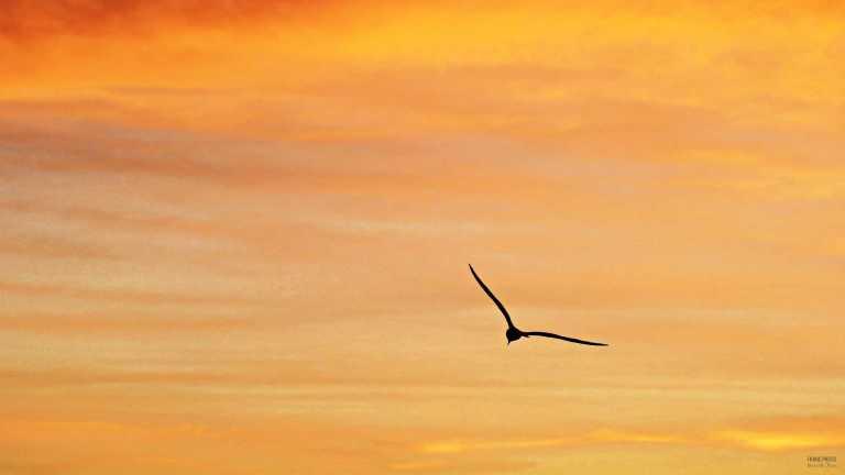solned_mås_francphoto_180713