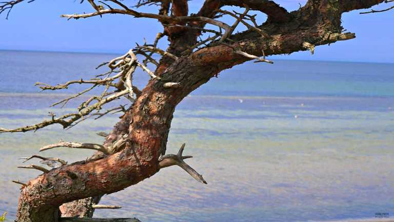 wood_ocean_francphoto_180712