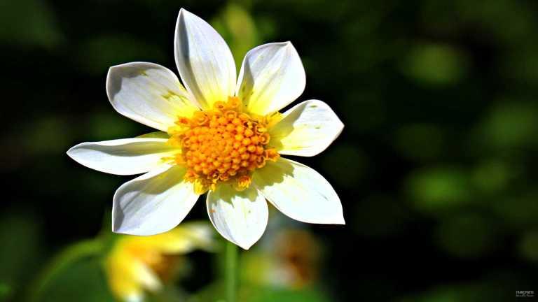 3flower_francphoto_180804