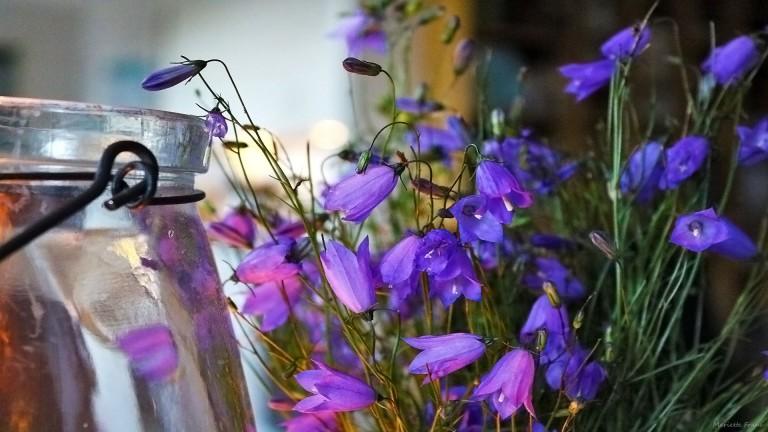 blommorivas3_francphoto_180825