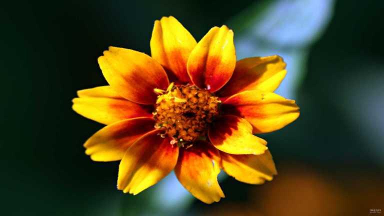 flower3_francphoto_180804