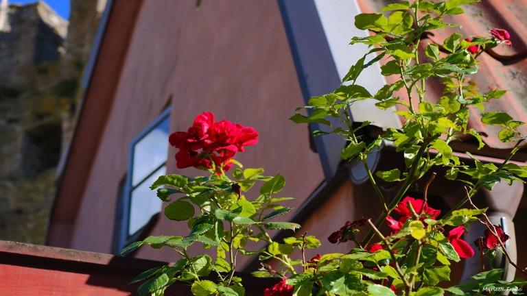 visbymur_roses_francphoto_180820
