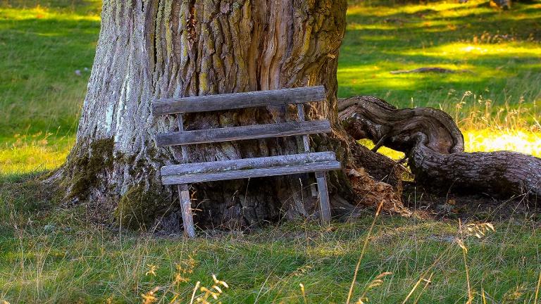 bench_francphoto_180923_press