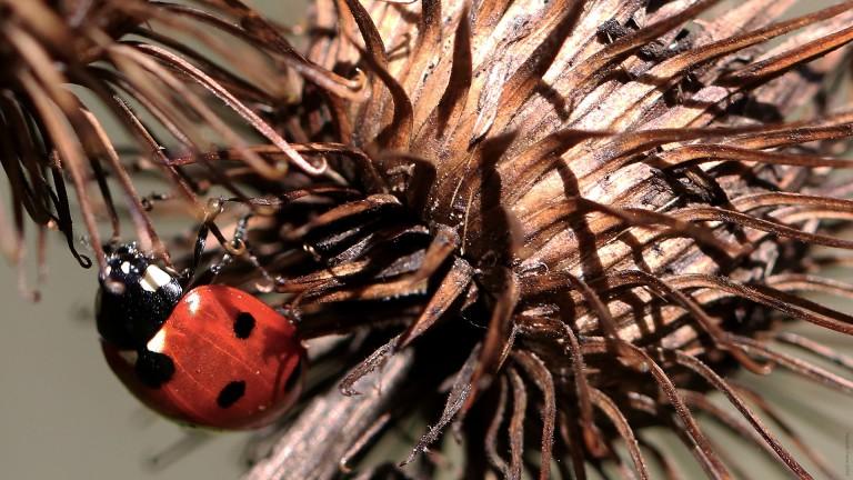 ladybird_francphoto_180918