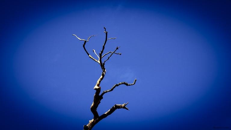 old_tree_sky_2_francphoto_180923_press