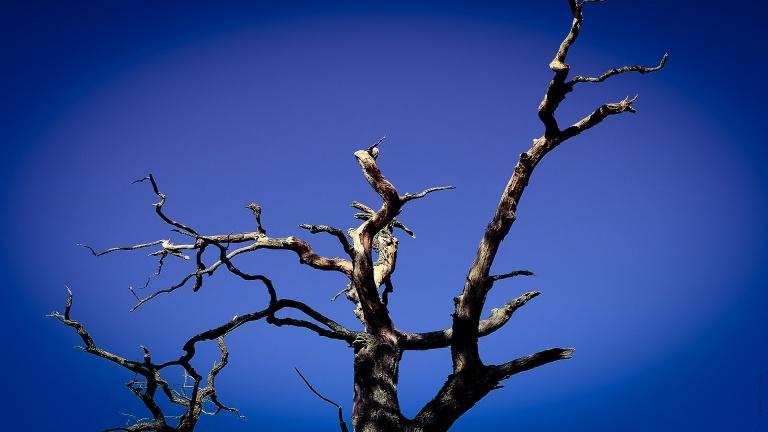 old_tree_sky_francphoto_180923_press
