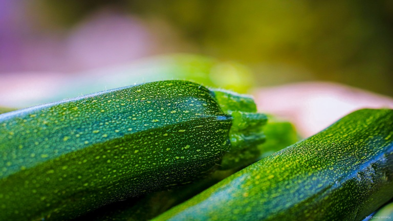 zucchini_hornudden_francphoto_180915_press