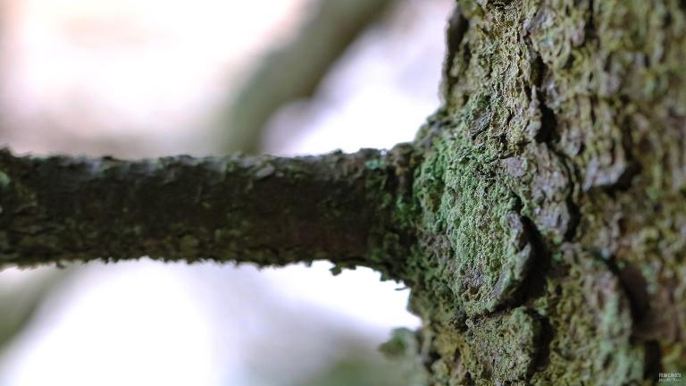 tree_181104_francphoto_press