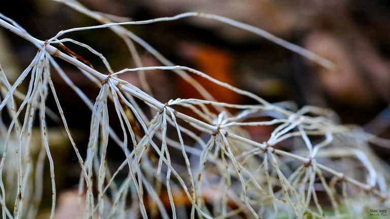 white_grass_181104_francphoto_press